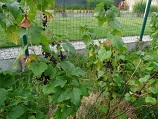 Permaculture - Cassis - www.tumia.org/en/directory/en/instance.php?tiname=Human-Caused%20Climate%20Change%20Damages:%20Change%20at%20the%20Top%20of%20the%20World%20-%20Full%20Documentary%20|%20Snagfilms&relationship=All&drsid=0&pisid=0&page=1